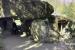 2018 Observatieplek Himalayaverblijf sneeuwpanter