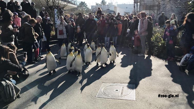 2018 De pinguïns werpen hun schaduw vooruit