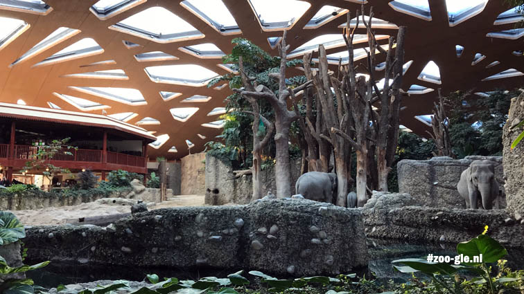 2018 Een houten schelp met 271 dakramen van UV-doorlatend folie