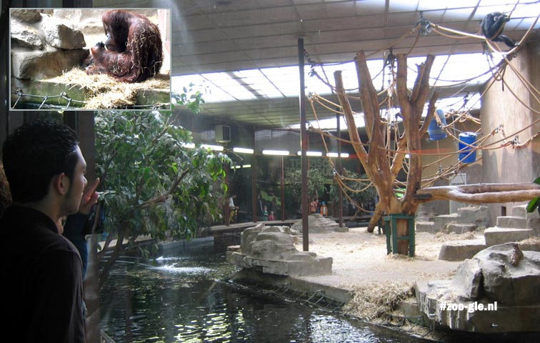 2006 Burgers' Park, Ape House