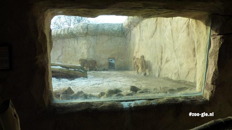2010 Lion enclosure