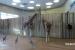 2010 Giraffenverblijf