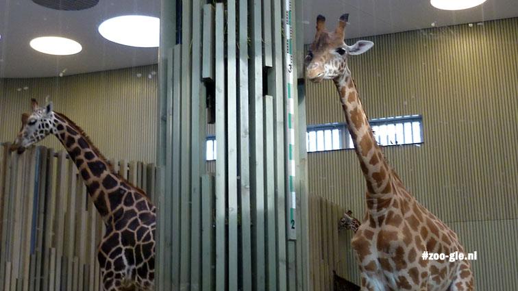 2010 Giraffe enclosure
