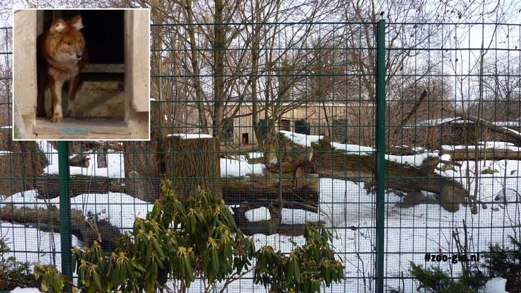 2010 Enclosure Asiatic wild red dog