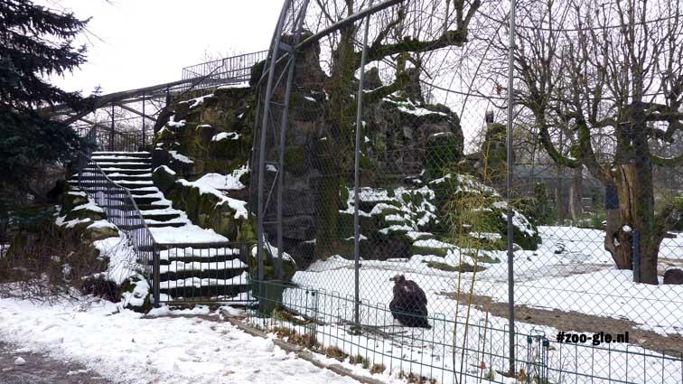 2010 Raptor aviary