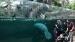 2018 Panoramavenster zeekoeien in regenwoudkas