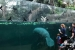 2018 Panoramic window view of sea cows in tropical greenhouse