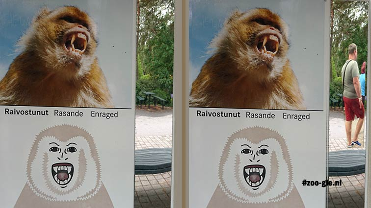 2018 Spiegels om na te apen