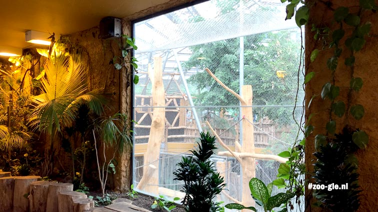 2018 Regenwoudhuis (Rumah hutan)