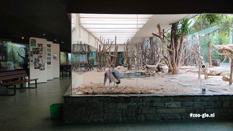 2018 Opvallende presentatie maraboes inde Faust vogelhallen