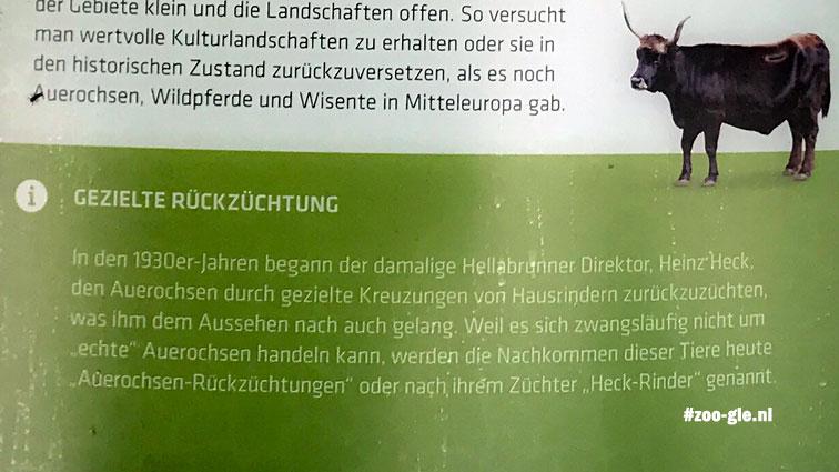 2018 Directeur Heinz Heck begon in de jaren 1930 rasdieren terug te fokken: Heckrunderen