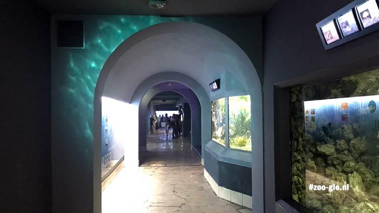 2018 Underground aquarium 1936