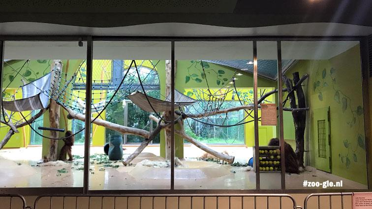 2018 In Apenwereld Noord een speelkamer voor de gorilla's, antropomorf