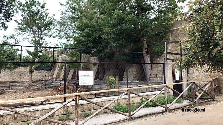2019 Langs de herten naar de hoogste verdieping in dierentuin Napels