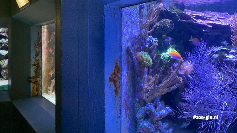 2020 Helaas roestplekken Aquarium