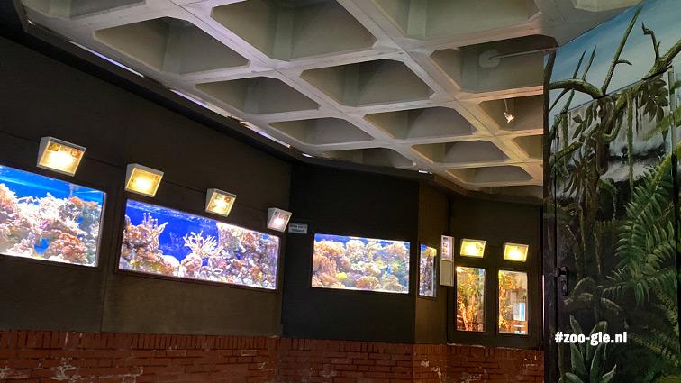 2020 Bovenverdieping Aquarium: 'n zigzag, randje bakstenen en eierdoosplafond
