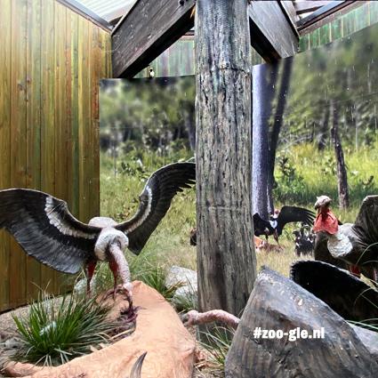 2020 Diorama Gierenrestaurant en 1 echt vogeltje