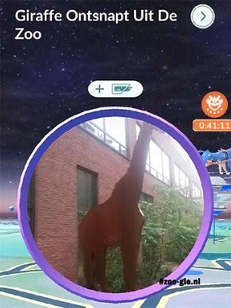 """2021 Beeld heet 2021 Beeld heet in Pokemon Go """"Giraf ontsnapt uit de Zoo""""in Pokemon Go Giraf ontsnapt uit de Zoo"""