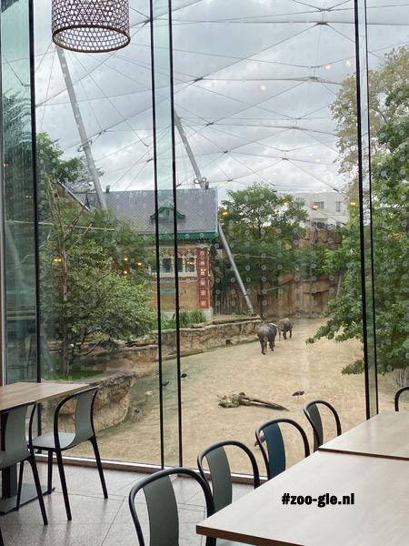 2021 Buffelsavanne en neushoornhuis vanuit het restaurant gezien