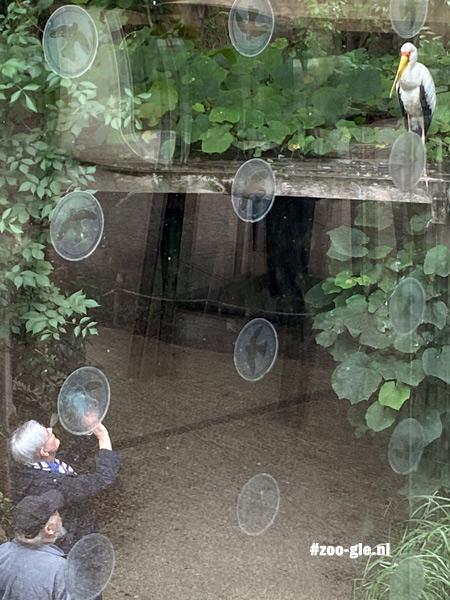 2021 Raamstickers. Wanneer glas lucht of bomen weerspiegelt, vliegen vogels ertegenaan