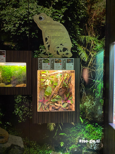 2021 Landscape immersion in het reptielenhuis: omgevingen van mens en van dier vloeien ineen